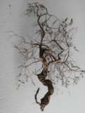 albero per il presepe