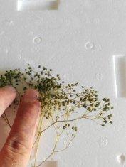 Pianta a foglioline piccolissime verde ulivo