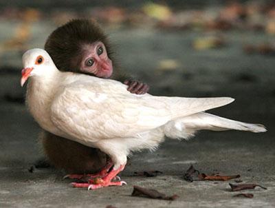 po_Compassion-pigeon