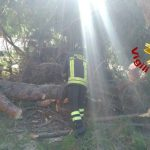 albero_caduto_prati
