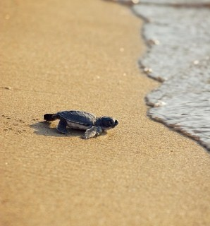Turtles in Cyprus