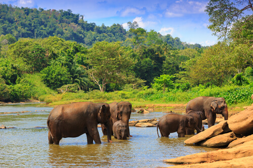 Discovering The Wild Side Of Sri Lanka National Parks 4