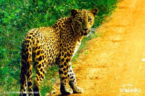 5 Top Reasons To Visit Sri Lanka 12