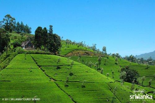 5 Top Reasons To Visit Sri Lanka 7