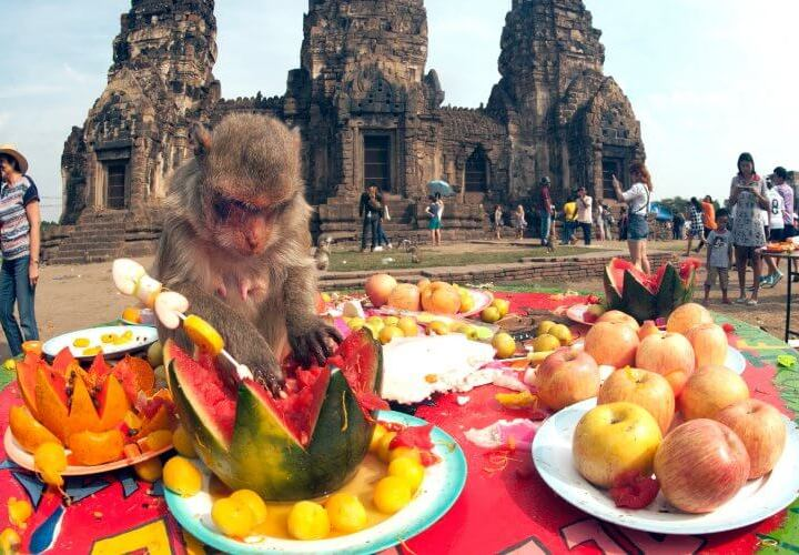 Monkey Buffet inThailand