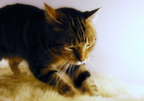 gatti comportamenti strani