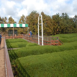 Looking over the maze toward the bell.