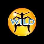 Wild FM Radio Recording Circa 1999 – 01