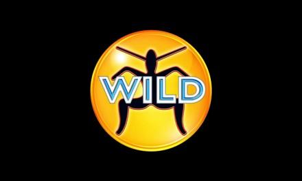 Wild FM Brisbane (97.3) – Transmission Shutdown (2000)