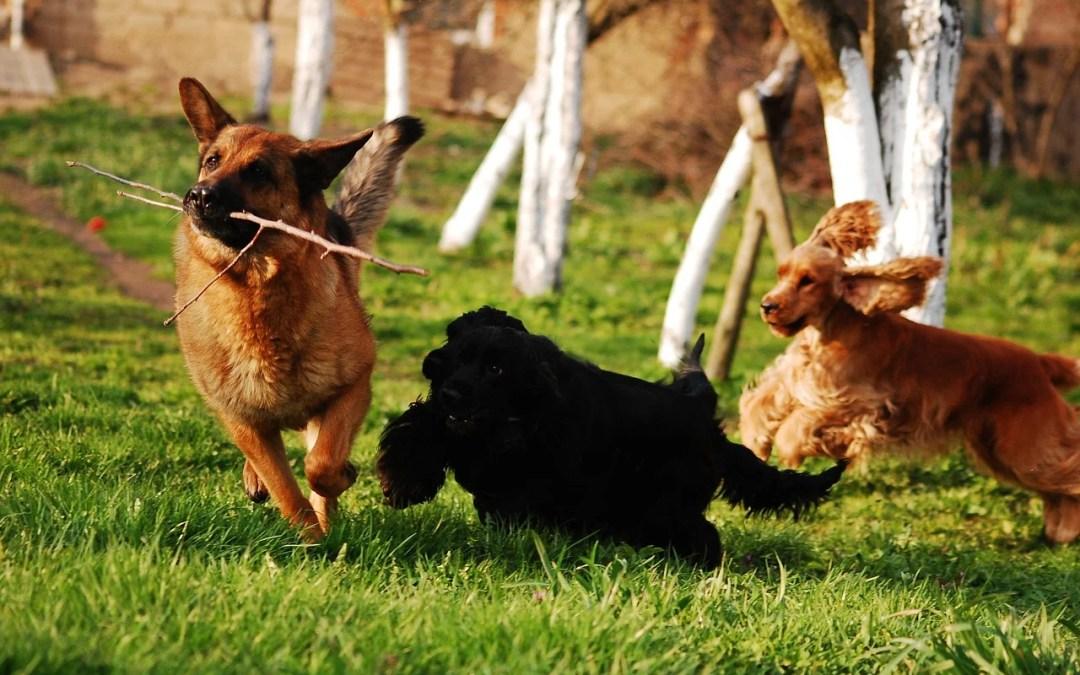 gara - area cani comunale