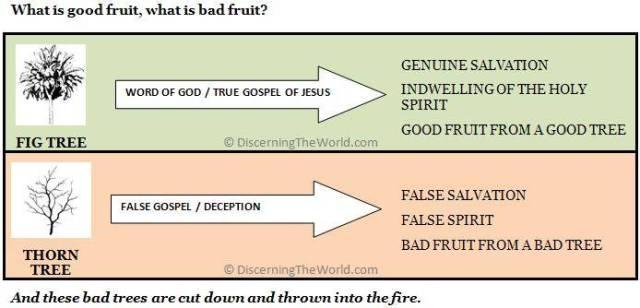 Good Fruit Bad Fruit - © DiscerningTheWorld.com - Fair Use Copyright - Please link to www.discerningtheworld.com when using this Image