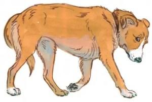 Tail Between Legs