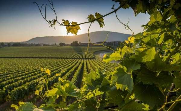 Degustazione tour di vini nella culla della Franciacorta