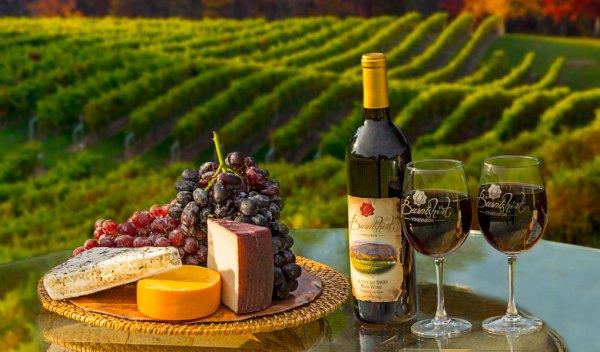 Cantine e Wine Tours da scoprire in piemonte