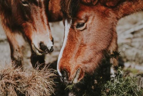 Nel 1994 in Australia si è verificato uno spillover: dai pipistrelli ai cavalli e poi all'uomo