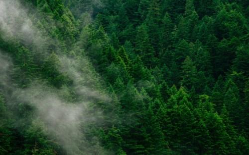 Lo stato delle foreste nel mondo è strettamente sorvegliato: la deforestazione e la frammentazione di questo habitat sono in aumento