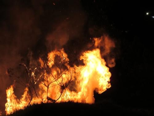 Milioni di ettari di foreste sono vittima di incendi durante quest'estate. Come nasce un incendio? Cosa succede dopo?