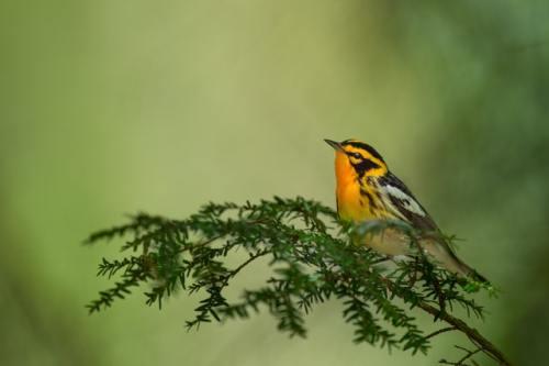 Le foreste sono uno degli habitat con il maggior grado di biodiversità.