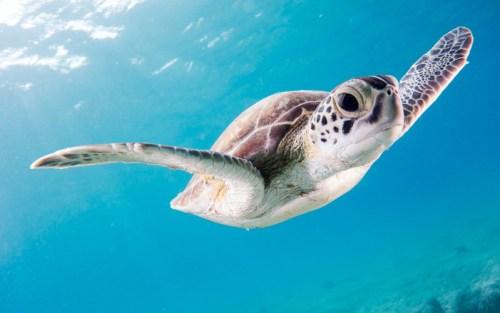 La salute degli oceani dipende anche dalla salute dei suoi abitanti: a causa dell'innalzamento del mare la nidificazione delle tartarughe marine è rischio