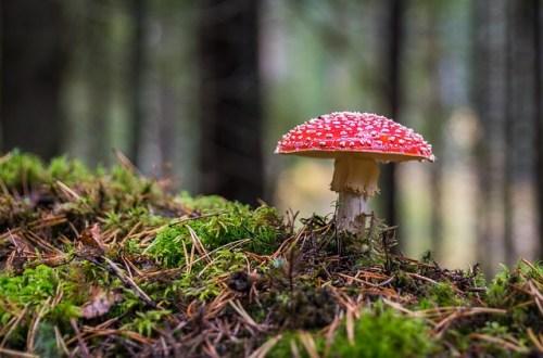 Di solito tra i funghi del sottobosco, i più colorati sono i più velenosi