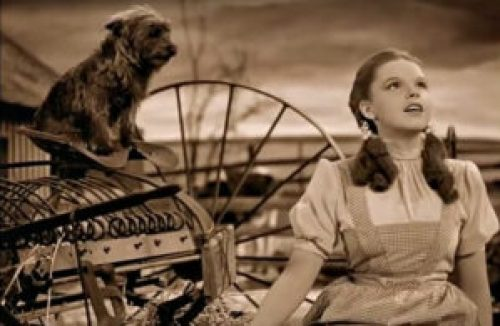 Judy Garland canta Over the rainbow nel film Il mago di Oz, del 1939