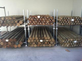 Treated Pine Logs