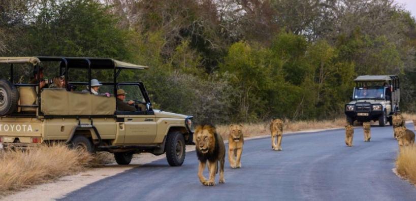 budget safari kruger national park