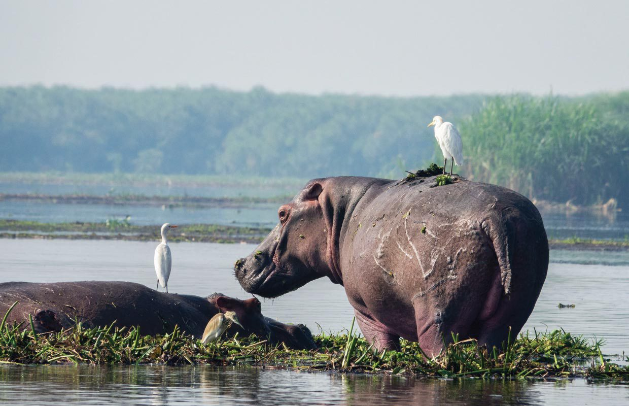 Murchison Falls National Park | Everything to know | Discover Africa Safaris