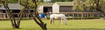 white-horse-1399313014uBc