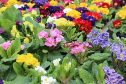 Westwoodside Plants