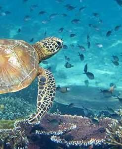 Snorkel with Hawaii's Tropical Marine Life