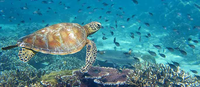 Snorkel with Hawaii's Tropical Marine Life
