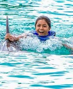 Sea Life Park Dolphin Royal Swim Adventure
