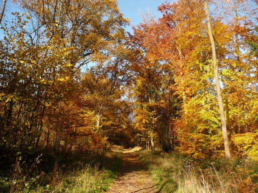 Autumn woodland walk in Flanders