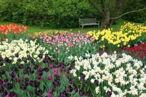 Coloma Garden Belgium
