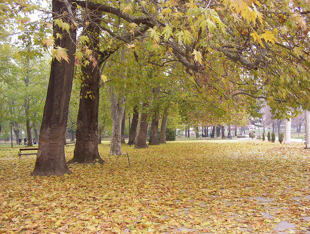 Skopje City Park Autumn 2