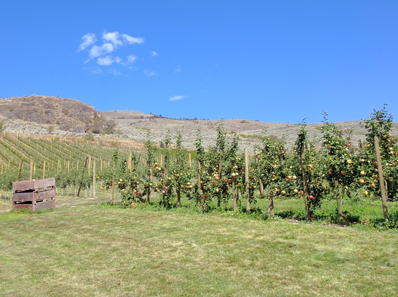Davison Orchards Vernon