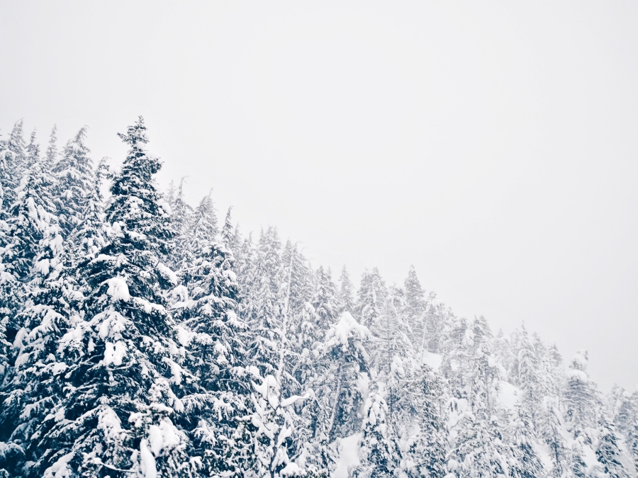 Go play outside: snow covered trees