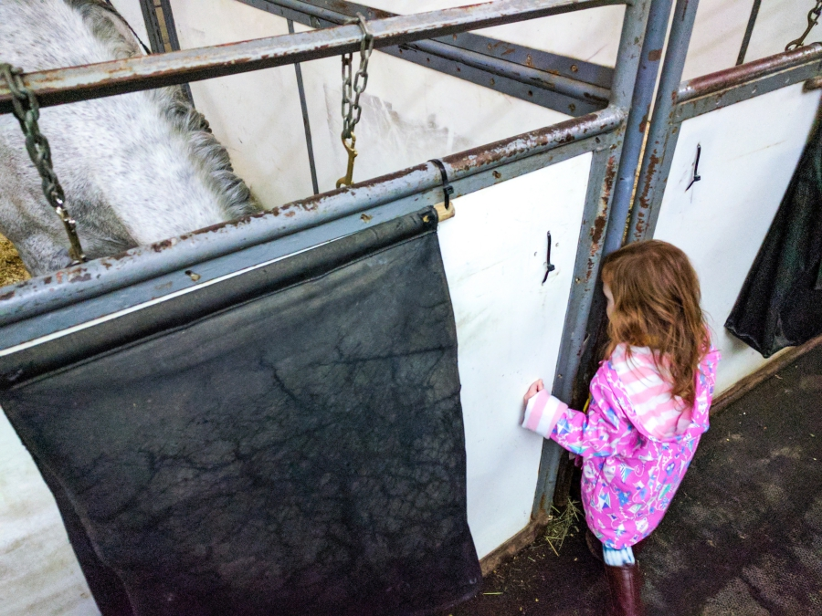 Cavalia Odysseo in Vancouver, preschooler during VIP experience meeting all the horses in the stable after