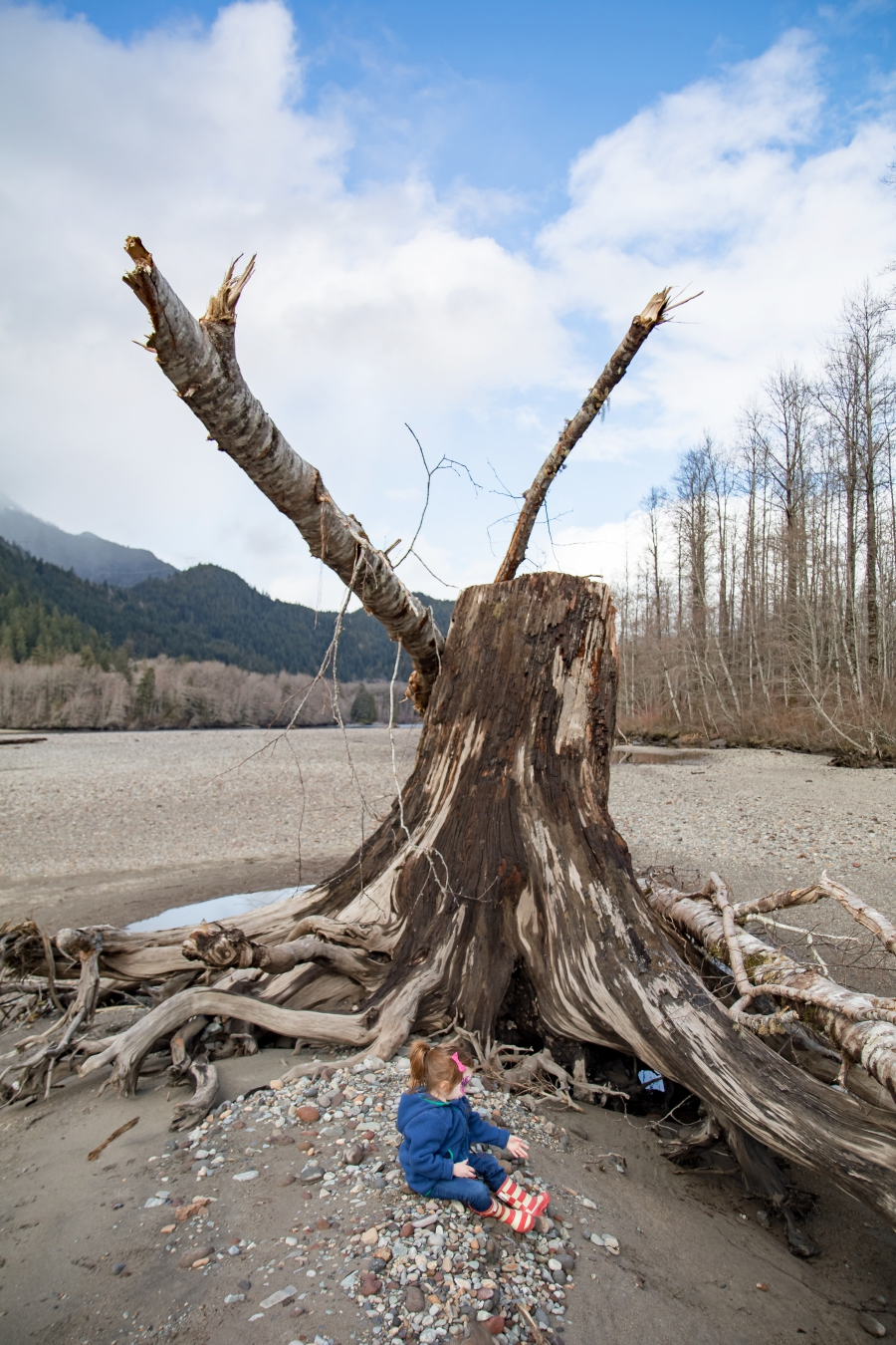 Squamish River Estuary, preschooler sitting beside a large stump