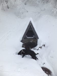 Mountain spring in the snow with dog. Beskydy mountains, Czech Republic.