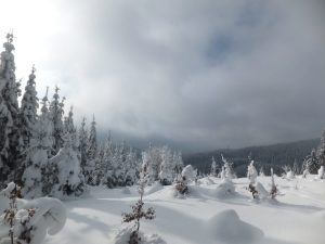 Cross-country skiing, Bumbalka, Beskydy Mountains, Czech Republic, Europe. The view South into Slovakia.