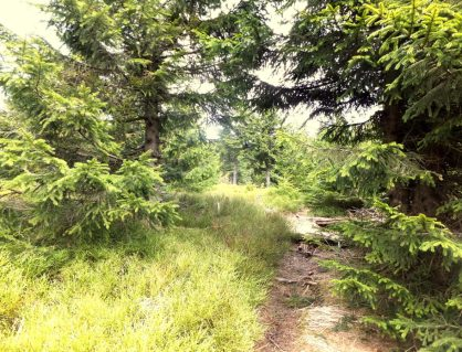 Travny Hiking Trail, Beskydy Mountains, Czech Republic Tourism (14)