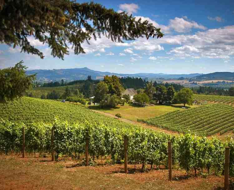 Wilamette Valley Pacific Northwest Getaways