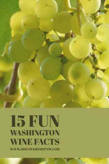 In the midst of swirling and slurping, it's easy to forget that wine is a major industry in Washington. So pour yourself a glass of your favorite Washington wine (and share what it is in the comments), and have a good time with the fun Washington wine facts.