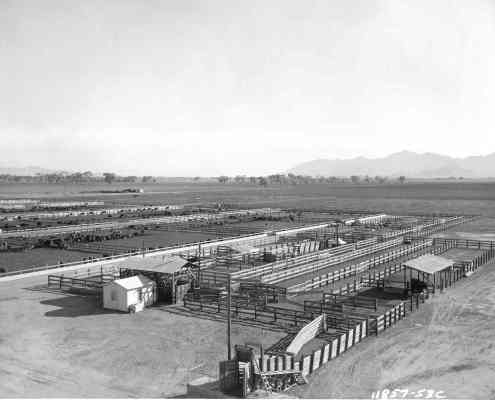 feed-lot-aerial-1953