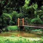 The 100-year-old spring bridge at Blanchisseuse. Photographer: Edison Boodosingh