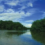 The Nariva Swamp. Photographer: Colin Silva