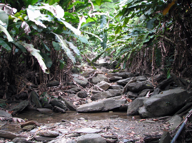 The trail to Edith Falls in Chaguaramas. Photographer: Caroline Taylor