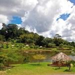 La Vega Estate Trinidad. Photograph by Ariann Thompson
